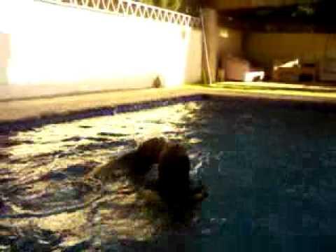 Pepa en la youtube for Pepa en la piscina