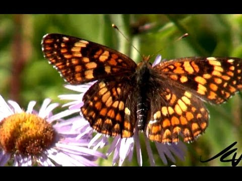 Mexico reports dramatic drop in Monarch butterflies  -  YouTube