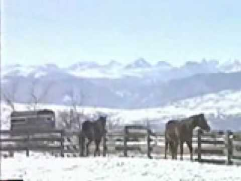Horses Running and Playing in the Snow