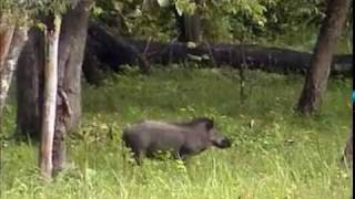 Muthanga Wildlife Sanctuary Wayanad Kerala Jungle Wild