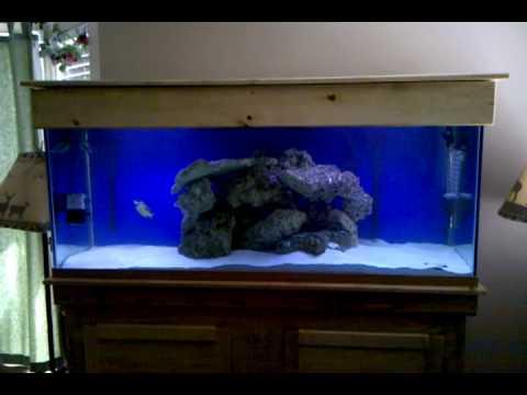 125 Gallon Saltwater Aquarium - YouTube