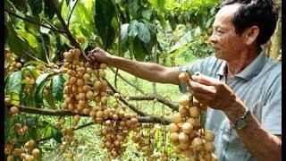Người Việt sang Mỹ làm trang trại nổi tiếng Florida