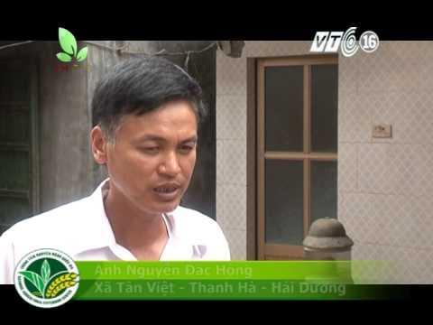 STN Nguoi mang nghe nuoi ran ho mang ve Tan Viet logo
