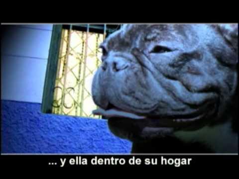 Perro Callejero -Banana