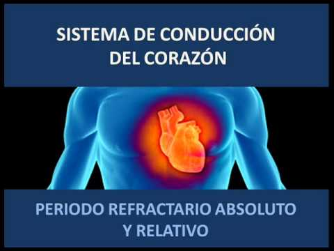 Sistema de conducción del corazón - Periodo refractario
