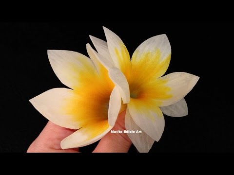 Beautiful Frangipani Flower Spring Onion - Lesson 25 By ...