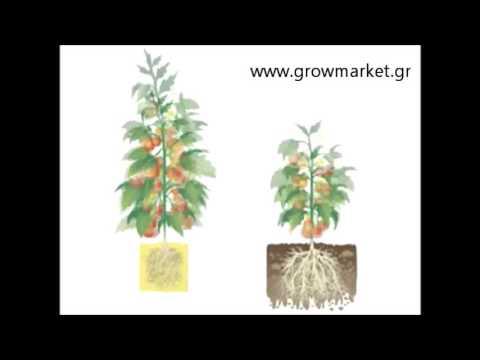 Υδροπονία vs Χώμα -Hydroponics vs Soil