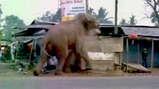 Caught on camera : A wild elephant tears through a Bengal town