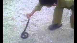 baru 6tahun...main ular tu.....(.hafizi.)
