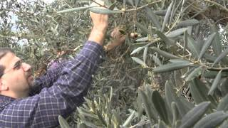 """Olive oil without borders"" - visit to the North"