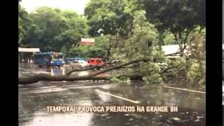 Chuva de granizo derruba �rvores e complica tr�nsito em Belo Horizonte
