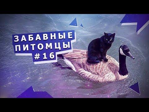 Приколы с животными #16 Funny animals #16