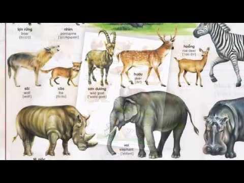 Động vật sống trong rừng