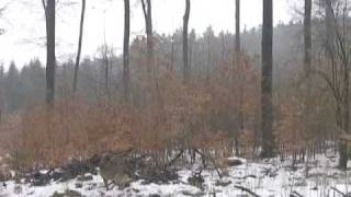 Video gadis cilik melayang di hutan Russia...Rekaman ini pertama kali diupload oleh seorang pengguna Youtube yang memiliki nickname Jevgenij2000 pada tanggal 2 Maret 2009. jgn lupa klik wow y...