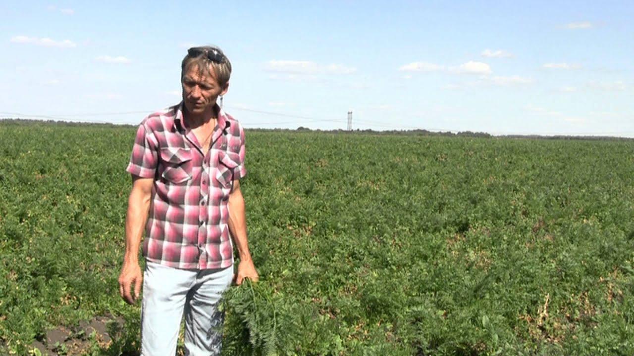 Фермерру выращивание моркови 52