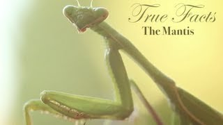 Ze Frank: True Facts About The Mantis