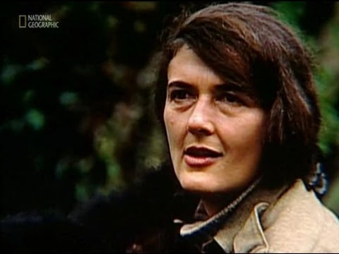 Dian Fossey 82nd Birthday Google Doodle