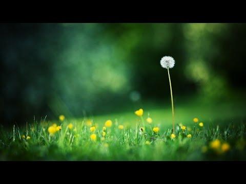 [Karaoke] Nhạc phim tôi thấy hoa vàng trên cỏ xanh - Ái Phương