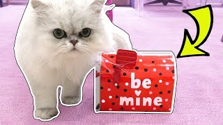 CLOUD GETS HIS VALENTINE'S DAY PRESENTS!!