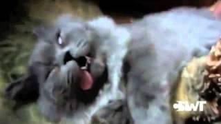 どんな夢を見たらこんな顔で寝るんだよww。死んでるかのような猫の顔