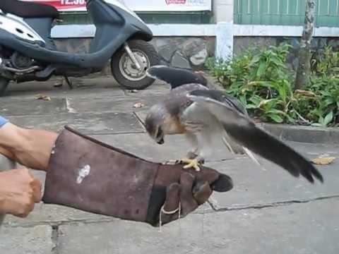 huan luyen chim sang moi  chu ky my tho tien giang