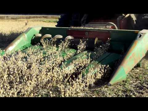 Ultra Late Soybean Harvest, 30