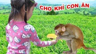 CHO KHỈ ĂN QUẢ 🤣 Bé cho khỉ con ăn quả ♥ Dâu Tây Channel