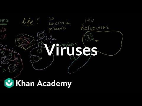 Viruses - KA
