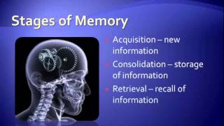 Improve Memory Tips Ways To Get A Better Memory