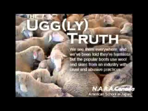 Cruel wool industry