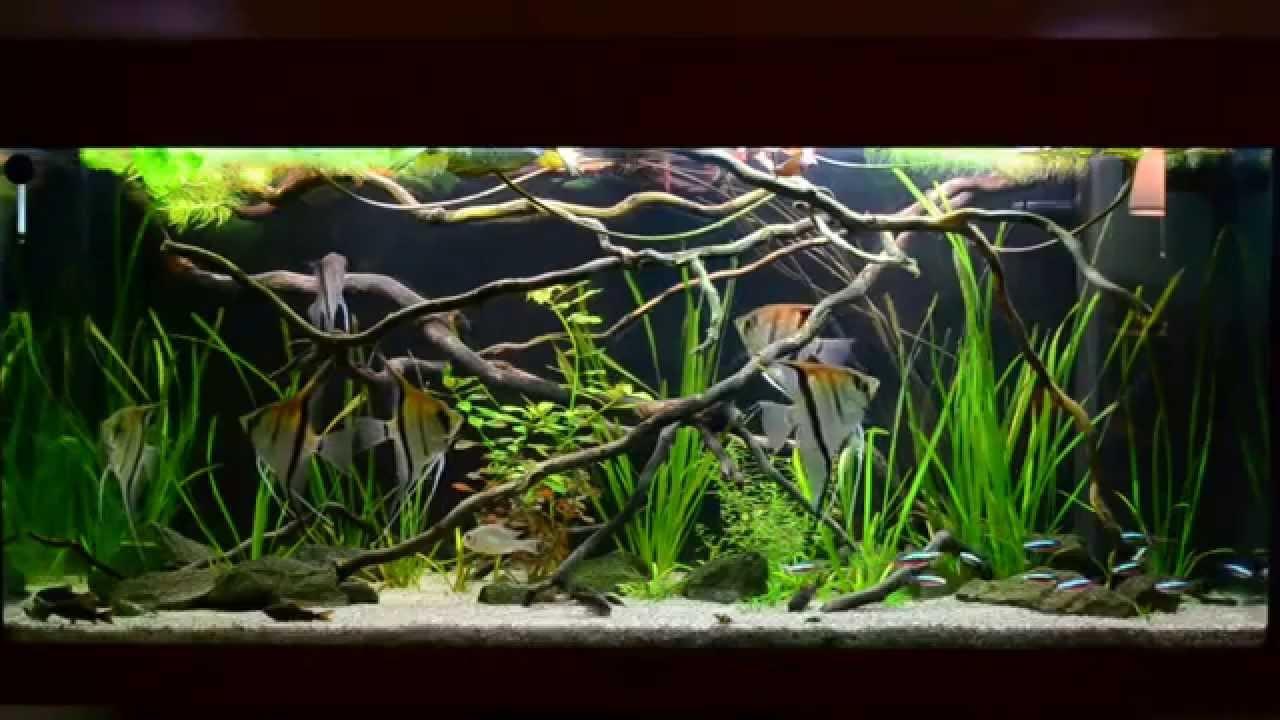 Amazon biotope aquarium 3 youtube for Amazon fish tank