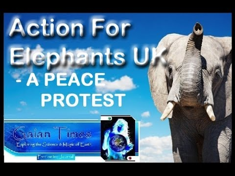 Peace Protest At Chinese embassy By Action For ElephantsUK  - A GaianTimes Special