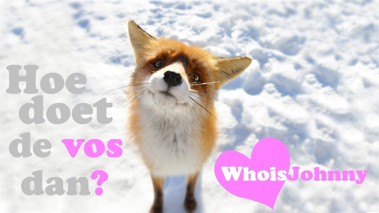 hoe doet de vos !