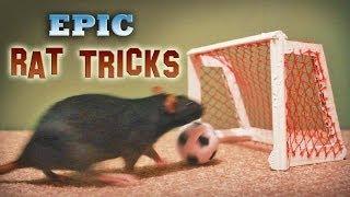 Epic Rat Tricks