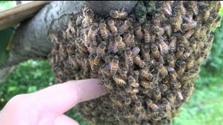 Boxing Bees By Hand