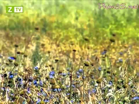 Côn Trùng Siêu Quậy full HD tập 08
