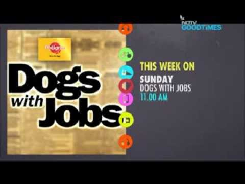 0 Meet the Dogs with Jobs    Bonita, Lily, Wheely Willy