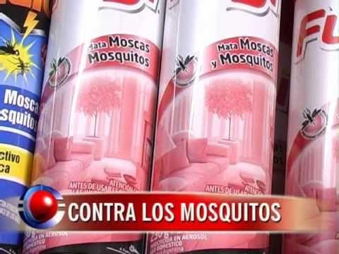 Citronella el producto m s buscado para matar mosquitos - Productos para matar ratones ...