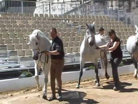 Feria de pentec te r p tition du spectacle equestre for Tele miroir nimes