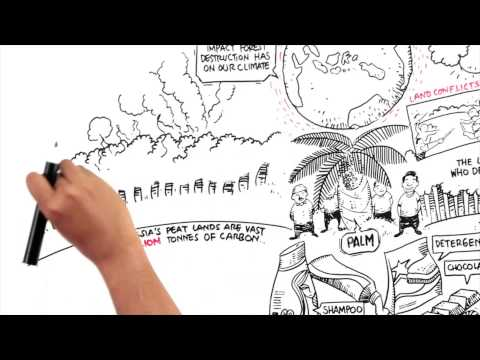 Protect Paradise: An Animation about Palm Oil
