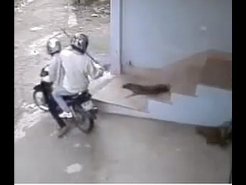 Cận cảnh Trộm chó - Quá nhanh quá nguy hiểm