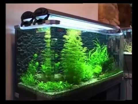 Внутренний фильтр для аквариума своими руками