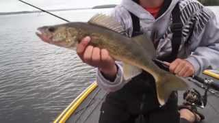 Jigging Kawartha Walleye