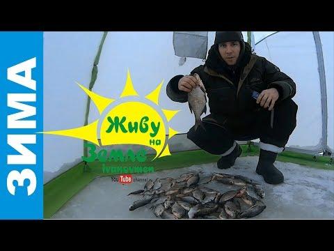 рыбалка с прикормом видео