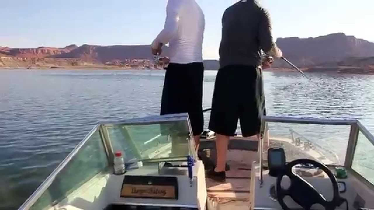 Fishing lake powell striper boils dungee fishing 1 1 july for Lake powell fishing license
