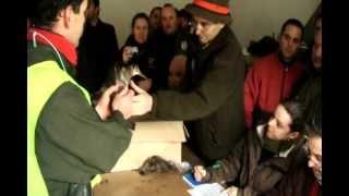 Campeonato De España De Becadas 2012 Sos Del Rey Catolico