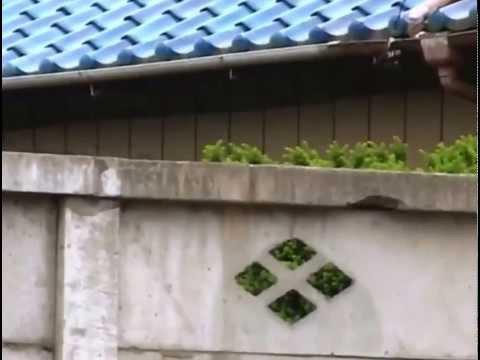 Phim hài Nhật Bản - Chó & Khỉ thông minh phần 1 - Tập 14 [HD]