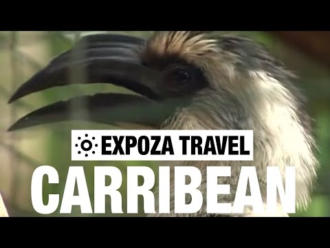The Caribbean Travel Guide