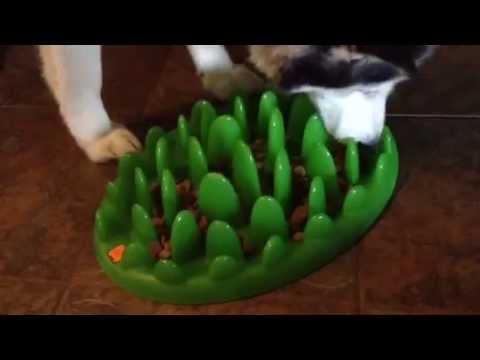 Dog Food Puzzle
