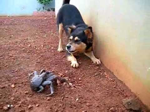 Why Does My Dog Eat Spiders